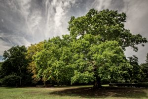 Gilwell Oak; Gilwell Park; Training Ground; UK Scouts;
