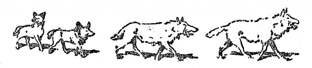 Wolf Cubs; Akela; Jungle Book;