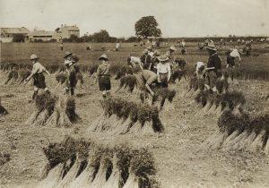 Scouts; First World War; Farming; Home Front; War effort;